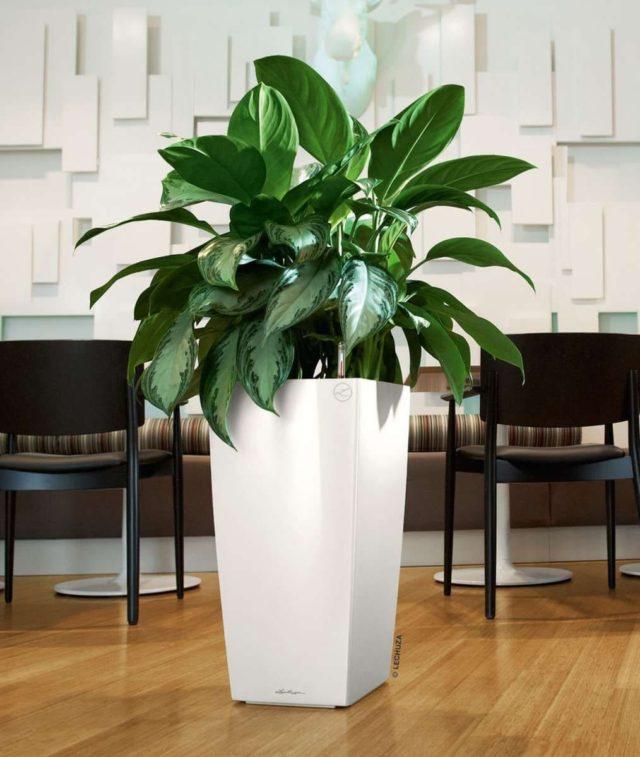 модные комнатные растения фото