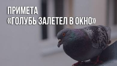 примета птица залетела в дом