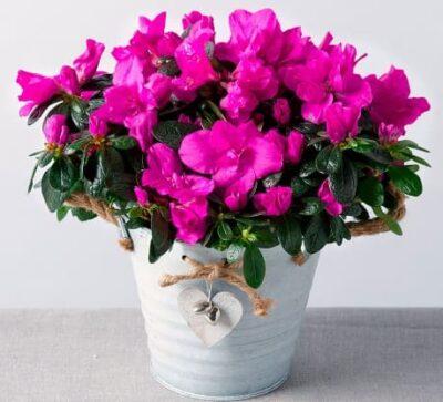 цветы в доме по фен шуй